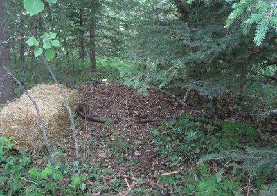 Mushroom area