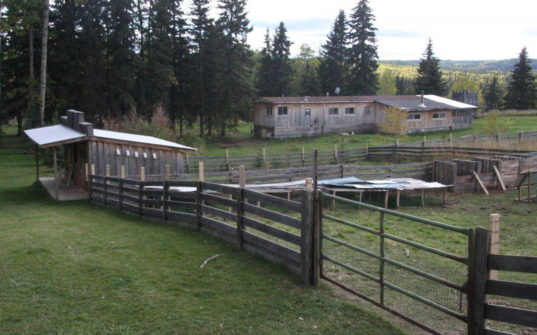 Chicken fence