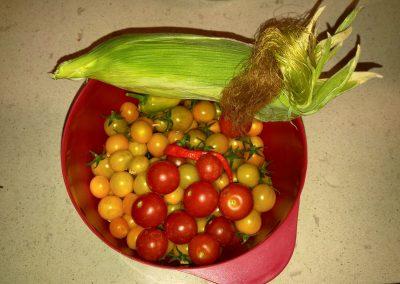 Tomatoes and corn