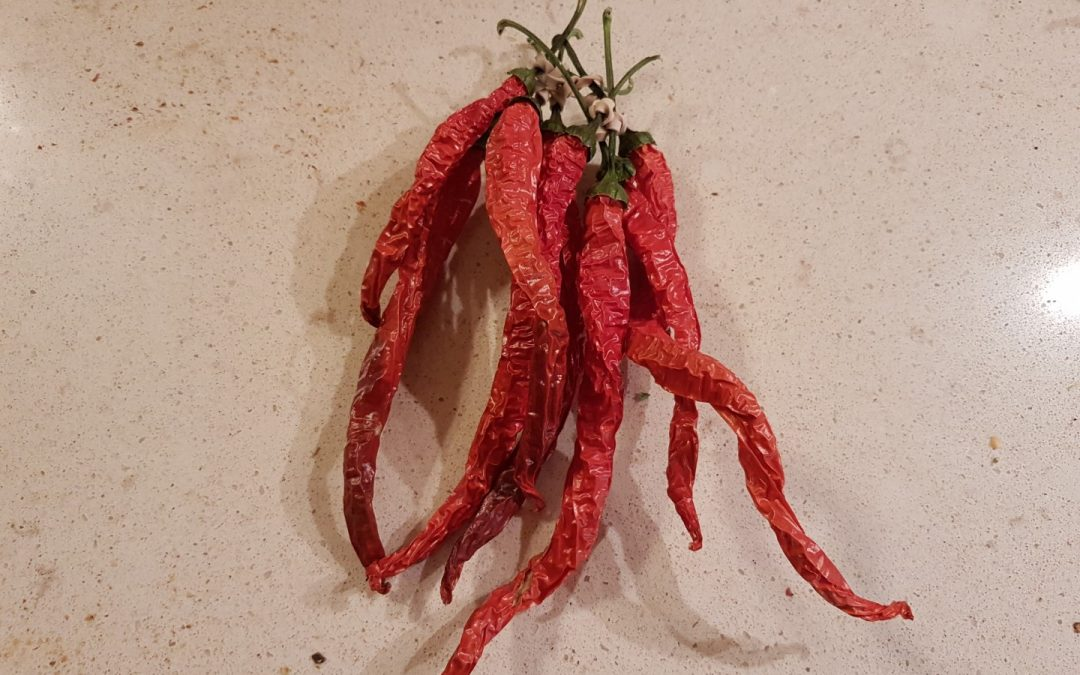 Witch Stick Peppers