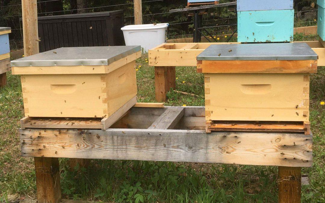 Honey Bee Splits