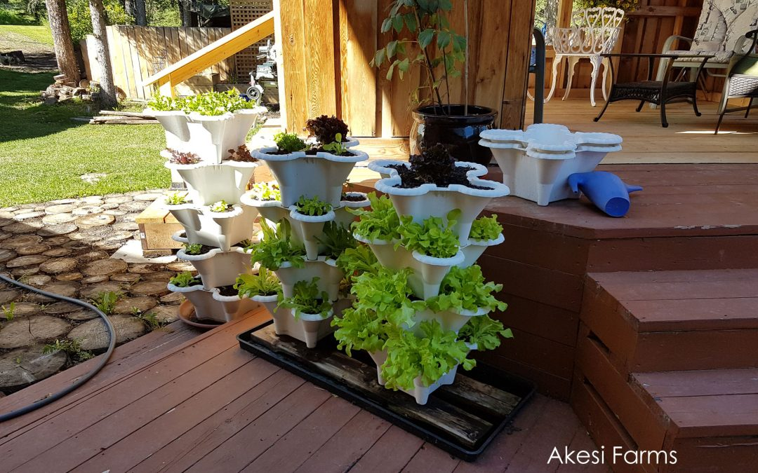 Lettuce Towers