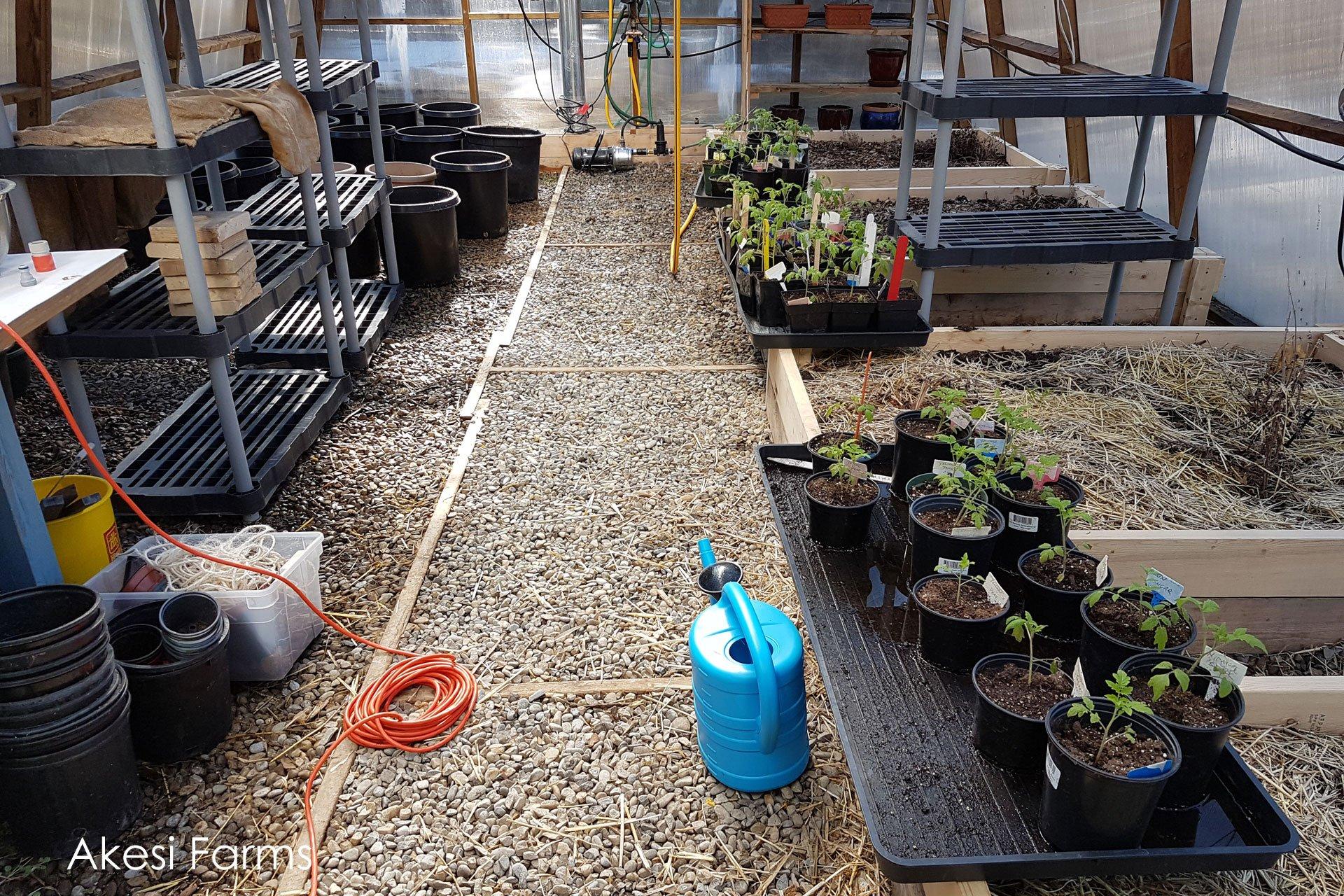 Greenhouse April 24