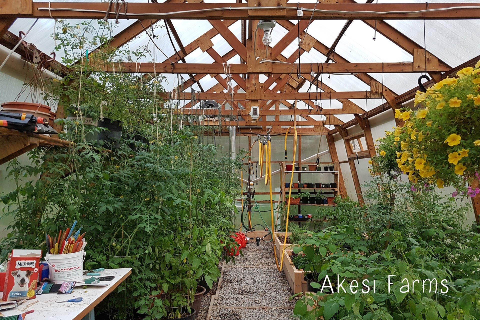 Greenhouse mid summer