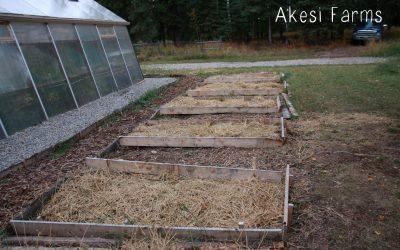 Straw as garden mulch