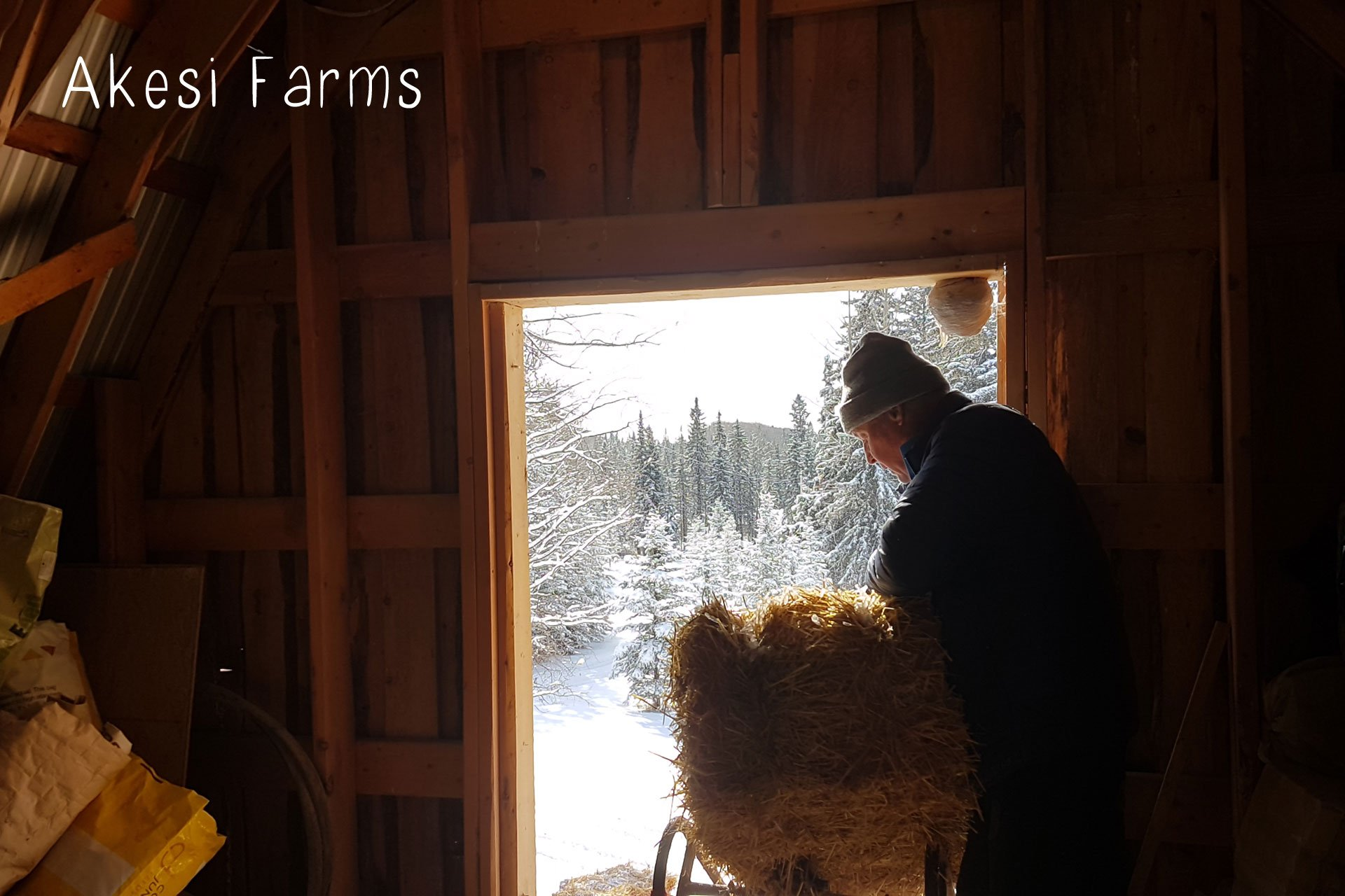 Grandpa helping with the bales